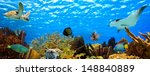 Underwater Panorama With Great...
