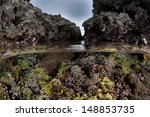Corals And Coralline Algae Gro...