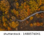 Autumn Tree Canopy At The Edge...