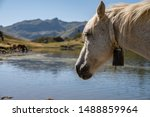 White horse head surrounded by fles in front of the lake is goiung to drink water in the mountains of french Pirynees.
