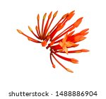 red spike flower photo isolated ... | Shutterstock . vector #1488886904
