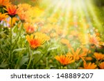 Field With Orange Flowers Of...