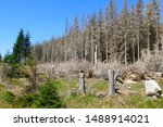 Catastrophic Forest Dying In...