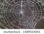 Spider Web In Nature On A Black ...