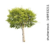 tree | Shutterstock . vector #148933211