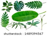 Different Tropical Leaves...