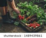 farmer folding fresh vegetables ... | Shutterstock . vector #1489439861
