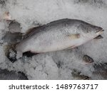 barramundi or seabass fresh... | Shutterstock . vector #1489763717
