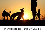 Stock photo silhouettes of puppies at sunset three puppies belgian shepherd dog malinois puppies many dogs 1489766354