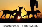 Stock photo silhouettes of puppies at sunset three puppies belgian shepherd dog malinois puppies many dogs 1489766387