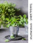 photo of fresh mint in a pot.... | Shutterstock . vector #1489795991