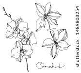 vector orchid floral botanical... | Shutterstock .eps vector #1489803254
