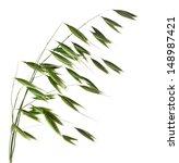 Green Oat Plant Closeup...