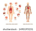 Human Body Anatomy Infographic...