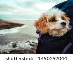 Stock photo puppy dog traveling in the bag adventure traveler happy pet 1490292044