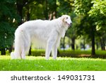 Beautiful Dog Breed Russian...