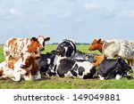 cows outdoors in meadow | Shutterstock . vector #149049881