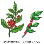 green coffee beans  stick of... | Shutterstock .eps vector #1490587727