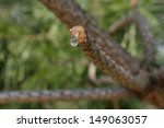 Small photo of twig with a modicum of of glue on background of trees