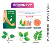 Poison Ivy Vector Illustration. ...