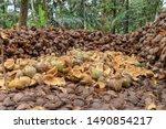 Coconut fiber that has been...
