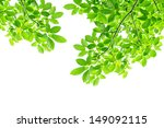 Green Leaf Background   Border...
