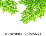 Green Leaf Background   Border...
