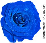 Beautiful Blue Rose Head With...