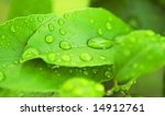 close up of green leaves with water drops - stock photo