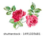 hand painted watercolor flower... | Shutterstock . vector #1491335681