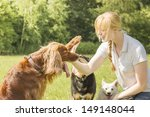 Stock photo dog trainer training irish setter to give high five 149148044
