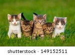 Stock photo group of five little kittens sitting on the grass 149152511