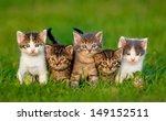 Group Of Five Little Kittens...