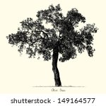 Stock vector olive tree silhouette vector 149164577