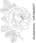 rose drawing line art . | Shutterstock .eps vector #1491863057