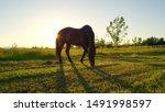 Beautiful Dark Stallion On...