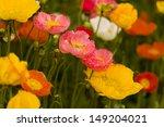 Garden In Full Bloom On Sunny...
