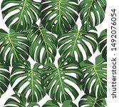 green vector of monstera leaves ...   Shutterstock .eps vector #1492076054