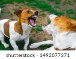 Two Dogs Are Fighting On The...