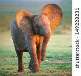 Stock photo baby elephant 149228231