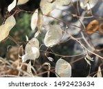 corfu  greece   flora and fauna ... | Shutterstock . vector #1492423634