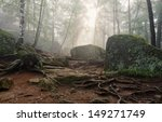 Foggy Morning In The Deep Forest