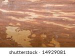 Texture Of Fresh Cutted Wood...