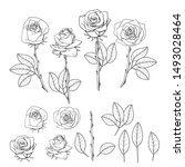 hand drawn rose flower. floral... | Shutterstock . vector #1493028464