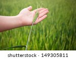 hand with green wheat ear | Shutterstock . vector #149305811