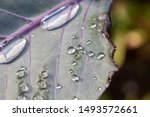 Close Up Of Rain Drops On The...