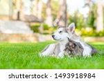 Alaskan Malamute Puppy...
