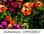 Orange Flowers In Carlsbad Ca