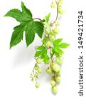 branch of hops on a white... | Shutterstock . vector #149421734