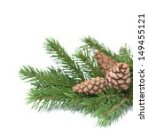 Fir Branches With Cones...